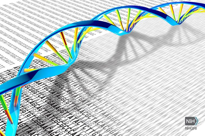 A DNA double helix rests on a print-out illustration of the DNA letters A, T, C and G./ Credit: Darryl Leja, NHGRI