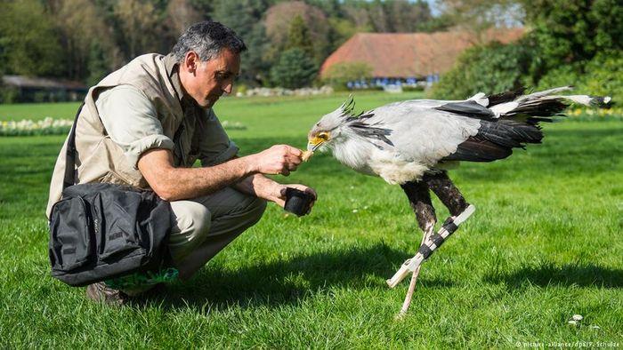 This secretary bird received a 3D-printed prosthetic leg to repair a broken left leg.
