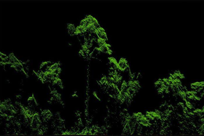 Lidar rendering of the tree. Photo credit: Michele Dalponte