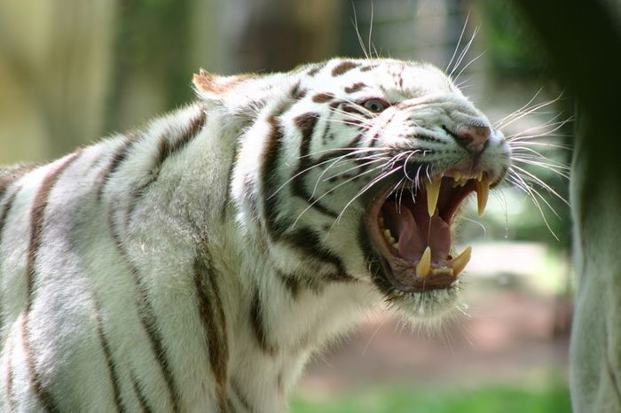 Large carnivores can be avoided with knowledge and common sense.