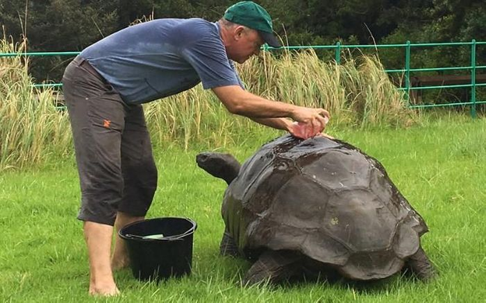Jonathan the 184-year-old tortoise has received his first bath.