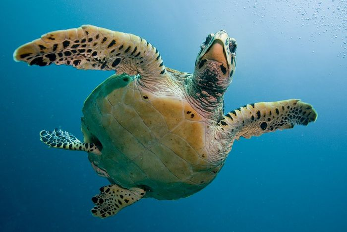 Sea turtles are among some of the most vulnerable marine animals to plastic pollution, but other animals suffer too.