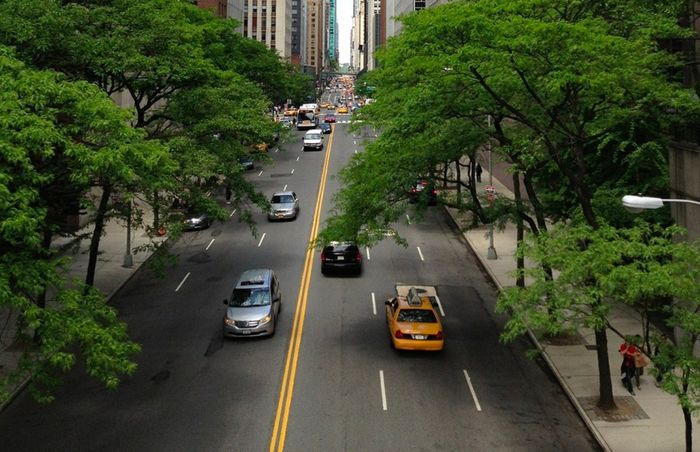 Tree Growth Acceleration is More Noticeable in Urban Areas | Plants And  Animals