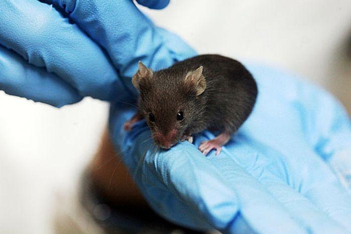 Researchers have shown brain activity that signals violence