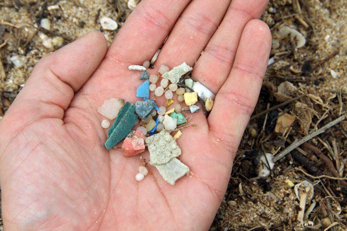Photo: Plastic Reef
