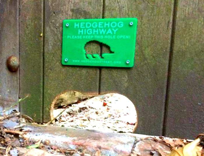 Hedgehog Highway, credit: Hedgehog Street