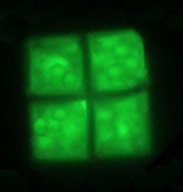 Four Haloquadratum cells line up to form a sheet.
