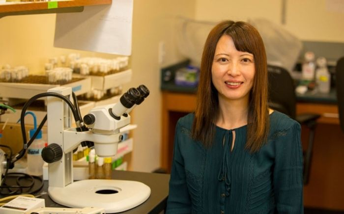 Xinnan Wang and her colleagues found that a defect within nerve cells could play a critical role in Parkinson's disease. / Credit: Stanford News - Norbert von der Groeben
