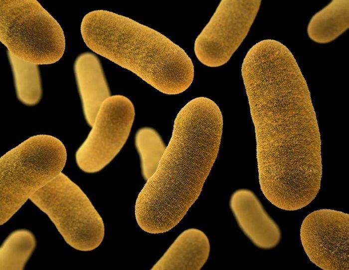 A 3D, computer-generated image of several Yersinia enterocolitica, Gram-negative bacillus-shaped bacteria / Credit: CDC/James Archer