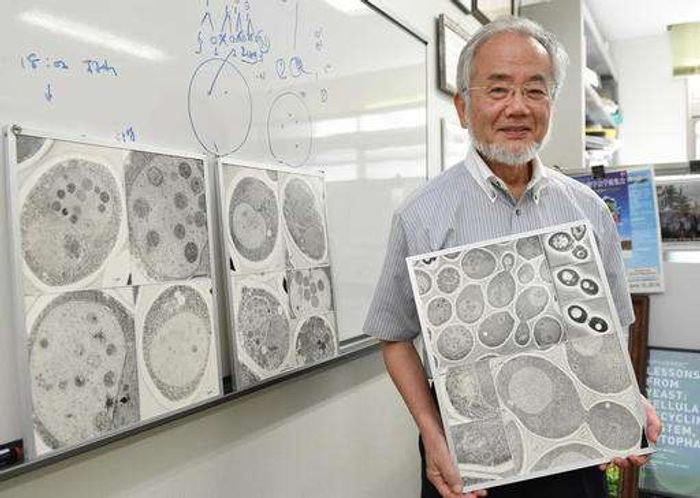 "n this July, 2016 photo, Japanese scientist Yoshinori Ohsumi smiles at the Tokyo Institute of Technology campus in Yokohama, south of Tokyo. Ohsumi was awarded this year's Nobel Prize in medicine on Monday, Oct. 3, for discoveries related to the degrading and recycling of cellular components. The Karolinska Institute honored Ohsumi for ""brilliant experiments"" in the 1990s on autophagy, the machinery with which cells recycle their content. Disrupted autophagy has been linked to various diseases. /Credit: Akiko Matsushita/Kyodo News via AP"