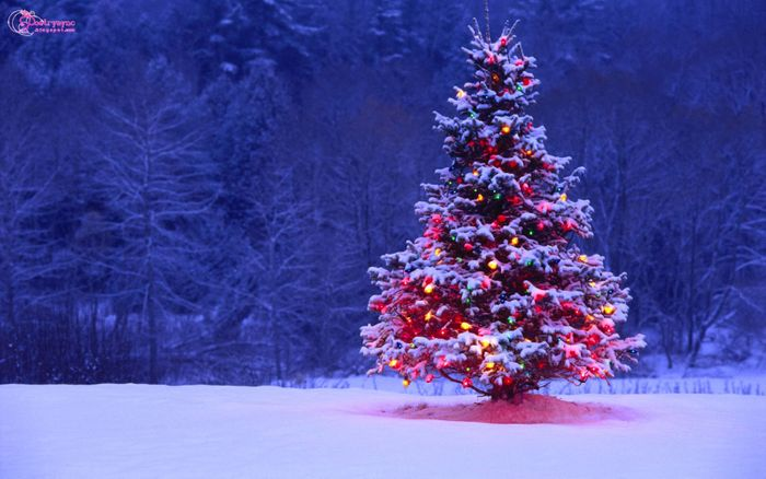 What are the environmental impacts of your holiday season this year? Source: Happy Holidays!