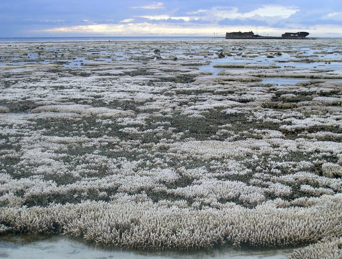 A major coral bleaching event on the Great Barrier Reef in Australia
