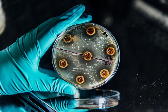 Research paves the way for new rational treatment strategies of multidrug-resistant chronic infections.  / Credit: Christian Als/ The Novo Nordisk Foundation Center for Biosustainability at the Technical University of Denmark