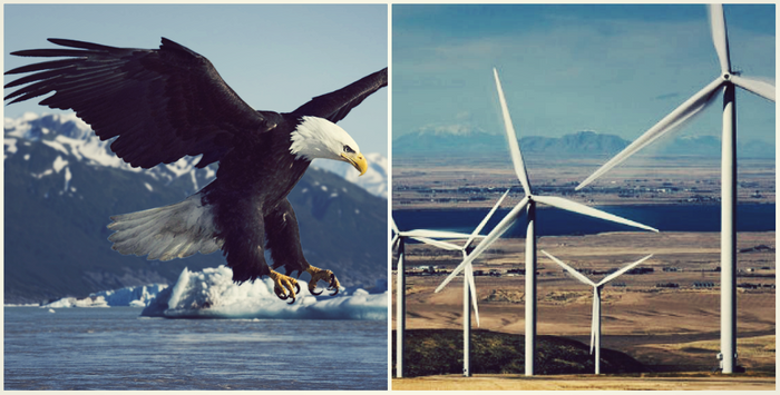 image of wind turbine and bald eagle, credit: OSU, CC by AWWE83
