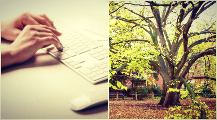 collage: image of golden elm, image of writing an email, credit: ABC Melbourne, public domain