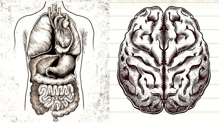 Gut microbes may predict Parkinson's disease.