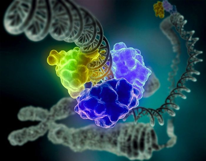 A rendering of DNA repair from Wikipedia