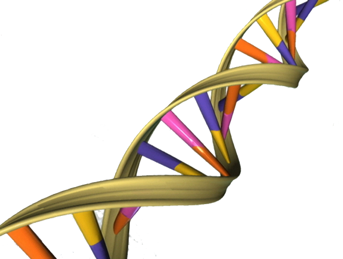 The helical nature of DNA has a kind of built-in timer that sets a rate for random mutations. / Image credit: NHGRI