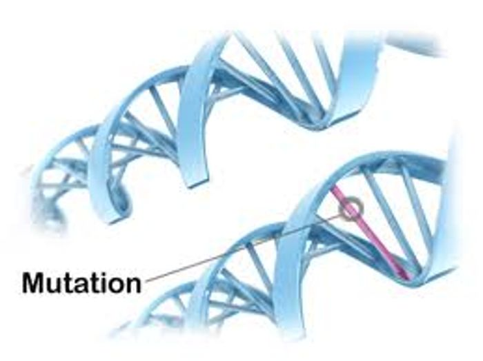 A simple genetic mutation can cause developmental issues.