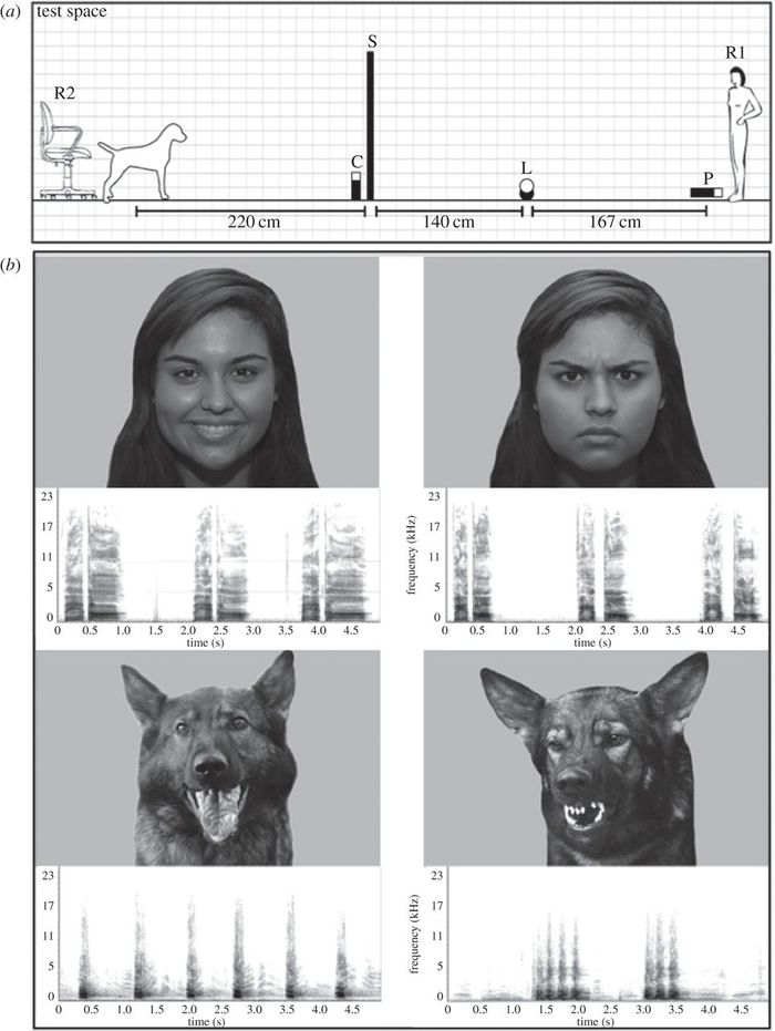 Some examples of what dogs were shown in the testing.
