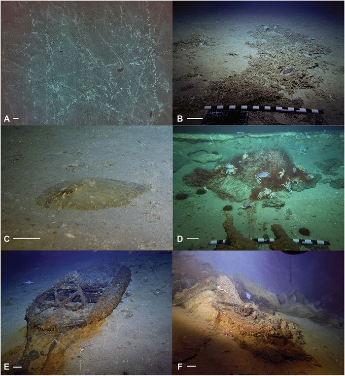 Example images of adverse impacts of fisheries on seamount deep-sea coral communities (Science Advances)