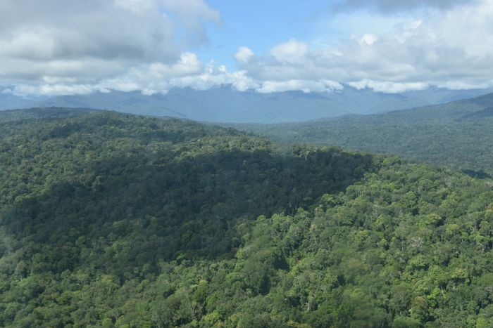 Primary forests are now protected in the Managalas Plateau. Photo: Rainforest Foundation Norway