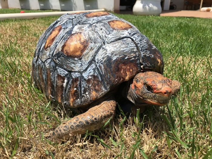 Fred the tortoise has received a new 3D-printed shell after being involved ina  forest fire that destroyed her original one.