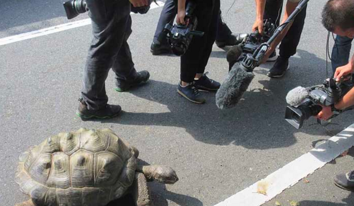 The tortoise was found and rounded back up so it could be returned to her home at the Shibukawa Zoological Park in Japan.