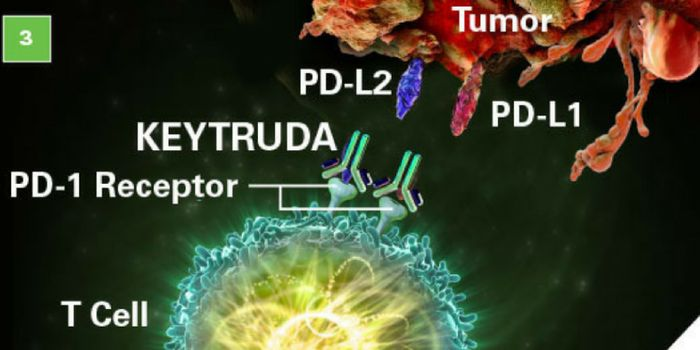 """KEYTRUDA binds to the PD-­1 receptor and blocks its interaction with PD-­L1 and PD-­L2, which helps restore the immune response."" - Keytruda.com"