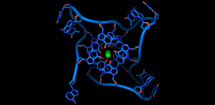 Square-shaped DNA helices abundant in cancer genes | Image: Balasubramanian Lab