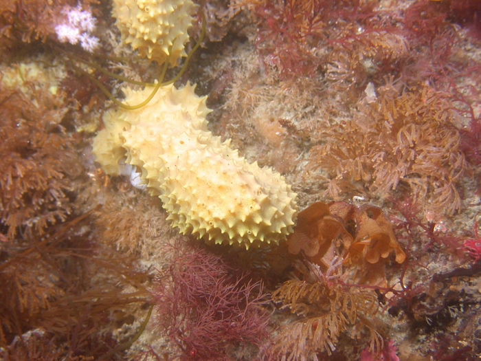 New compound in arctic sponge can kill MRSA