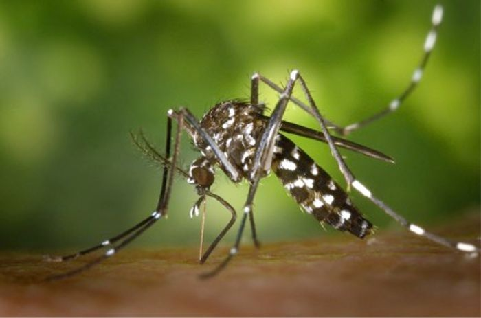 New test approved emergency use in Zika detection