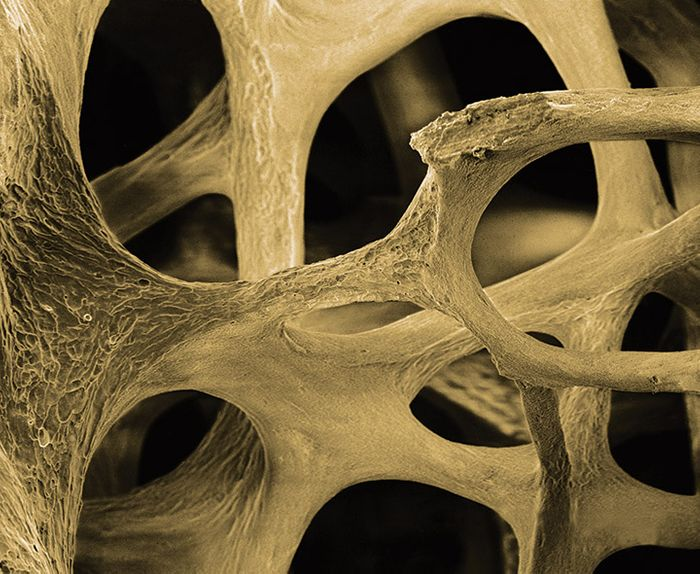 Nanoscale vibrations kickstart stem cells into bone cells | Image: ostinol.com