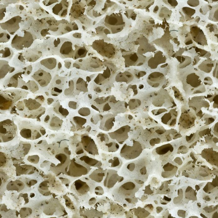 Scientists grow living bones in a dish