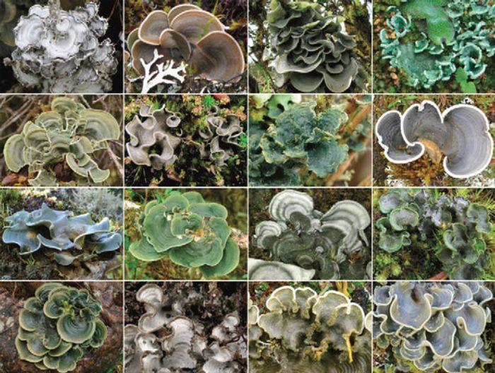 Lichens are composite organisms.