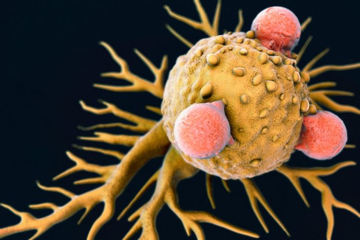 An illustration of cytotoxic T cells attached to a cancer cell