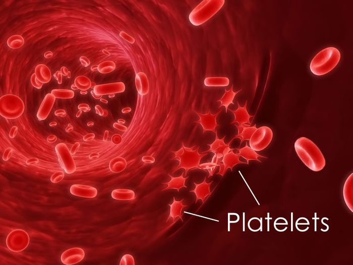 Platelets are derived from megakaryocytes in the bone marrow and aid in clotting. (Public Domain)