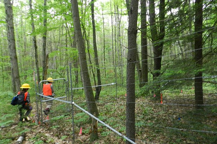 Researchers at Harvard Forest. Photo: University of Delaware