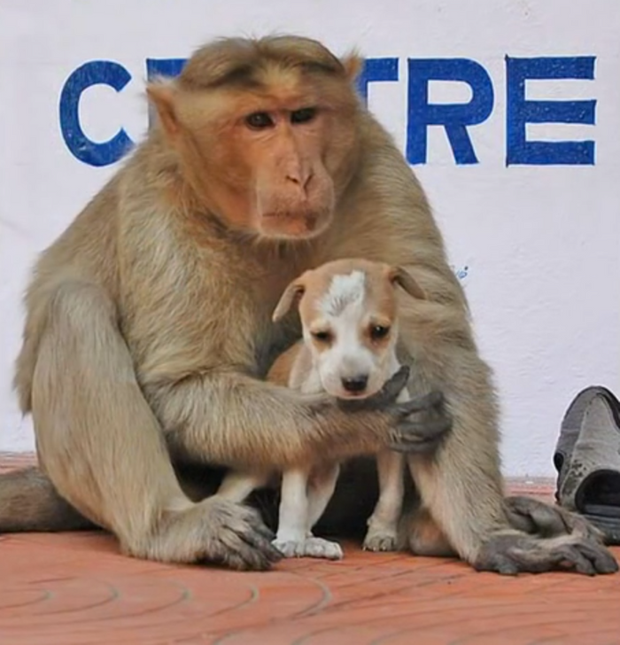 A monkey in India has reportedly adopted a stray dog and is now taking care of it.