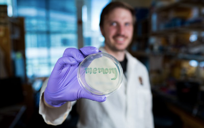 David Riglar, first author, holds a petri dish with engineered bacteria exposed to inflammation signals. The bacteria turn blue when the memory switch is on and the reporter gene β-galactosidase converts the X-Gal substrate to a blue precipitate. / Credit: Wyss Institute at Harvard University