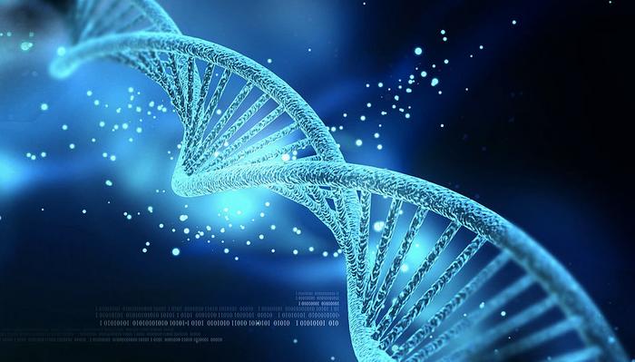 DNA / Credit: Nogas1974/Wikipedia