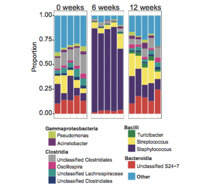 An infection with the Leishmania parasite dramatically altered the skin microbiome in mice, according to a new study. / Credit: UPenn News/ Cell Host & Microbe