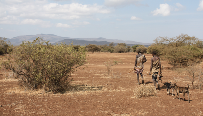Two Hadzabe men in Tanzania walking, carrying bows and today's catch.Two dogs follow them./ Credit: Wikimedia Commons/Andreas Lederer