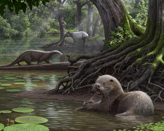 An artist's impression of the massive new otter species in its natural habitat, 6.1 million years ago.