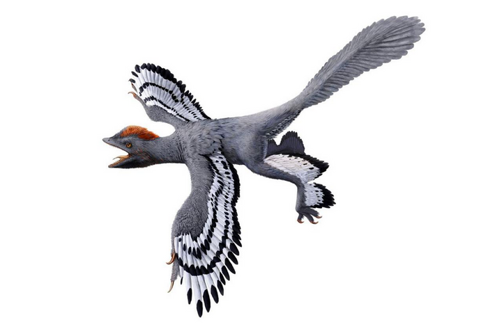 Meet the most accurate rendition of the incredibly bird-like Anchoirnis yet.