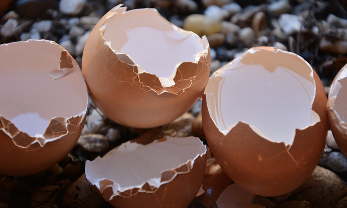Eggshells have the integrity to protect a developing chick, but will crack when it's ready. / Image credit: Pixabay