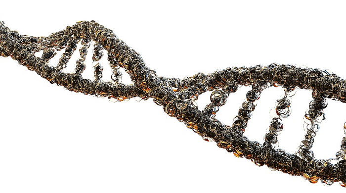 Non-coding regions, which have been called junk DNA, make up the vast majority of our genome. / Image credit: Maxpixel