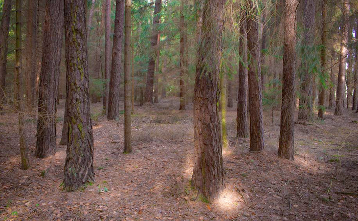 A forest floor is rich with carbon for soil microbes to process / Image credit: Pexels