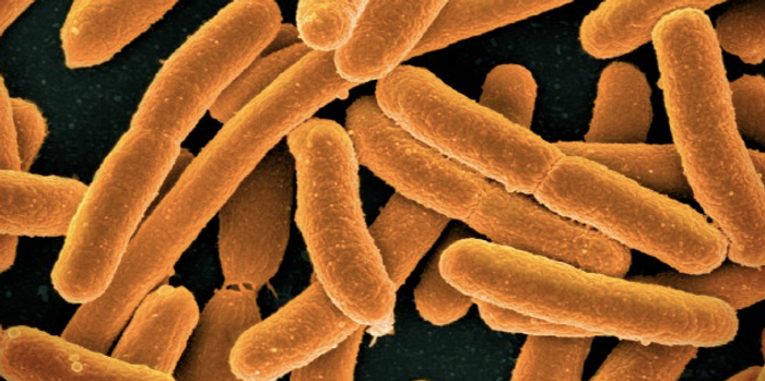 Colorized scanning electron micrograph of Escherichia coli / Image credit: NIAID