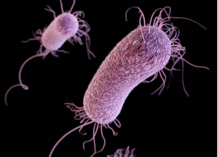 A three-dimensional (3D) computer-generated image of three multidrug-resistant, Pseudomonas aeruginosa bacteria. The artistic recreation was based upon scanning electron microscopic (SEM) imagery. Credit: CDC/ James Archer